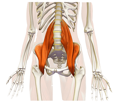 Músculo iliopsoas del abdomen ejercicios abdominales en casa