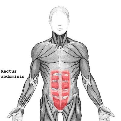 musculo recto del abdomen ejercicios abdominales en casa