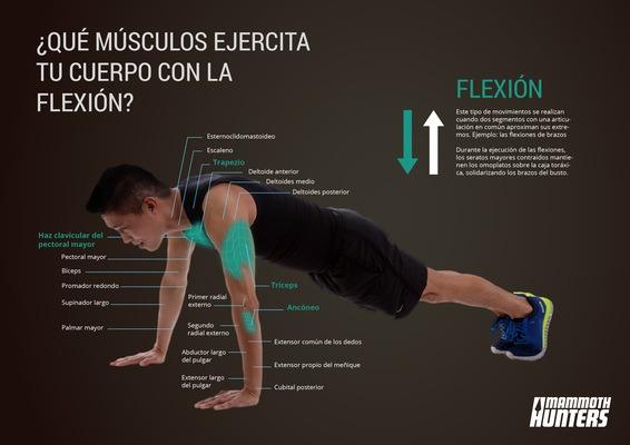 musculos que trabajan durante las flexiones de brazos