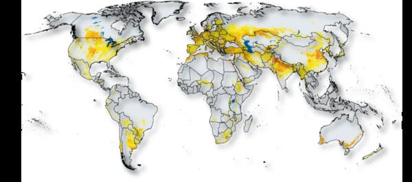 produccion de trigo mundial y produccion de gluten