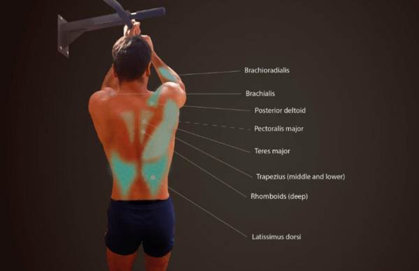 dominadas agarre neutro musculatura