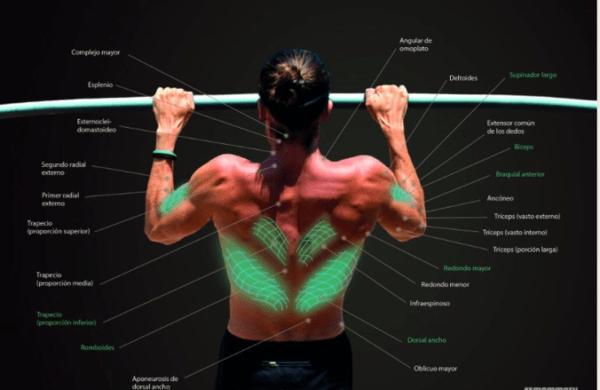 dominadas agarre prono musculatura