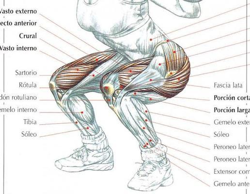 musculatura de las sentadillas como hacer sentadillas perfectas