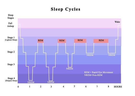 ciclos de sueño