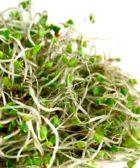 sulforafano-brotes-de-brocoli