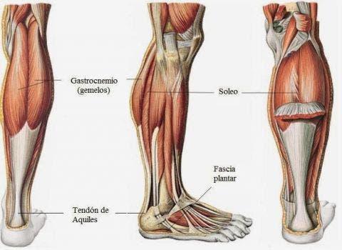 gastrocnemio musculatura ejercicios para piernas en casa