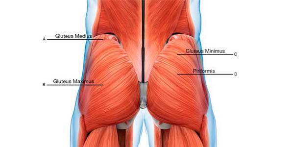 gluteo musculatura ejercicios para piernas en casa