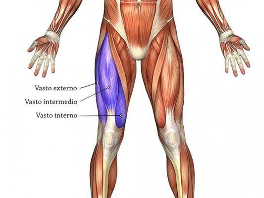 musculatura cuadriceps ejercicios para piernas en casa
