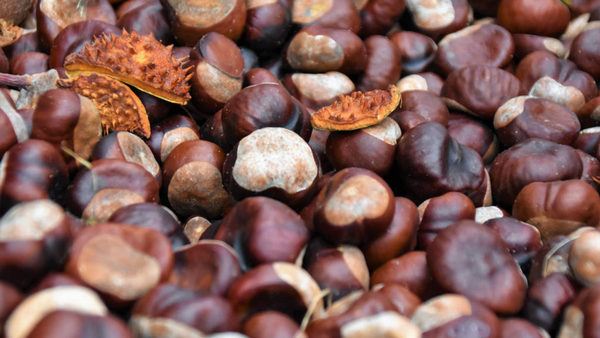 castañas  guia de los frutos secos