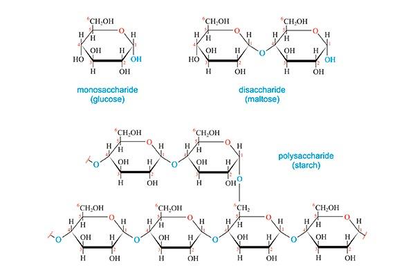 carbohidratos-simple-vs-carbohidratos-complejos-en-la-dieta-cetogenica