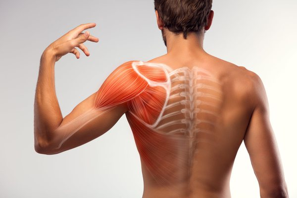 musculatura de espalda - mejores ejercicios de espalda