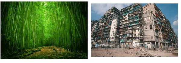 naturaleza vs ciudad