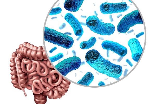 cómo mejorar la microbiota intestinal