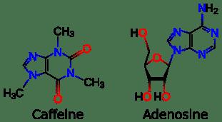 estructura química de la adenosina y la cafeína