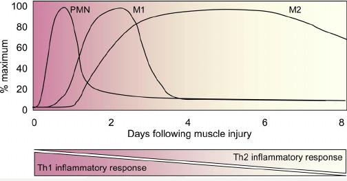 proceso de una inflamación - cómo recuperarme de una lesión